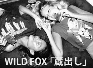 Wild Fox 蔵出し!