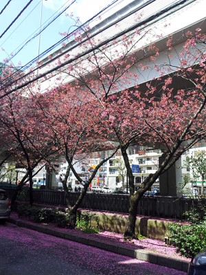 河岸通りの春